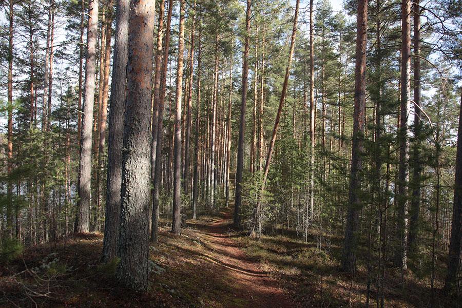 Paistjärven retkeilyalue Heinolassa on erinomainen valinta rauhaa rakastavalla retkeilijälle. Kuva: Päivi Tommola