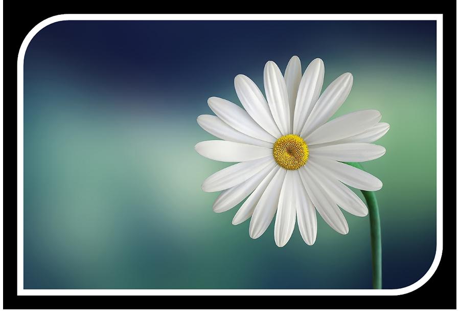 EduPal-hankkeessa kehitetään palliativiisen hoitotyön ja lääketieteen koulutusta.