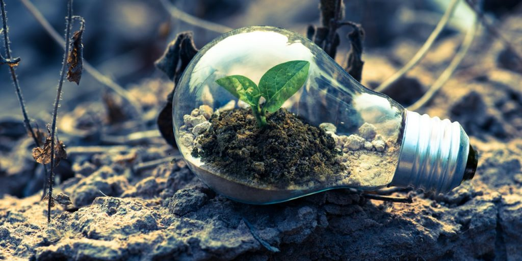 A picture containing a bulb with a small plant inside placed on a grey rock.