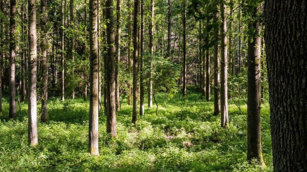 Kuvituskuva metsästä.